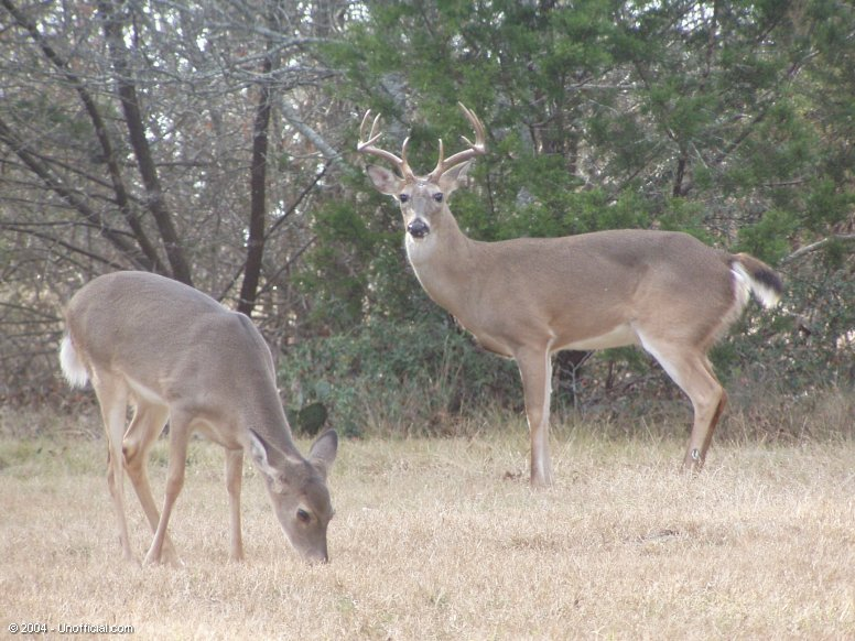 Front yard visitors in northwest Travis County, Texas