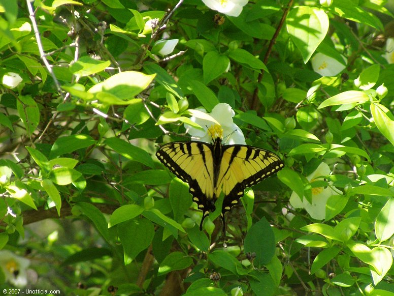 Butterfly in northwest Travis County, Texas