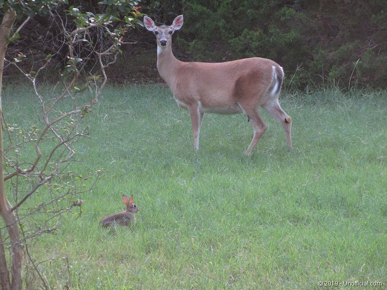 Front yard pals in northwest Travis County, Texas