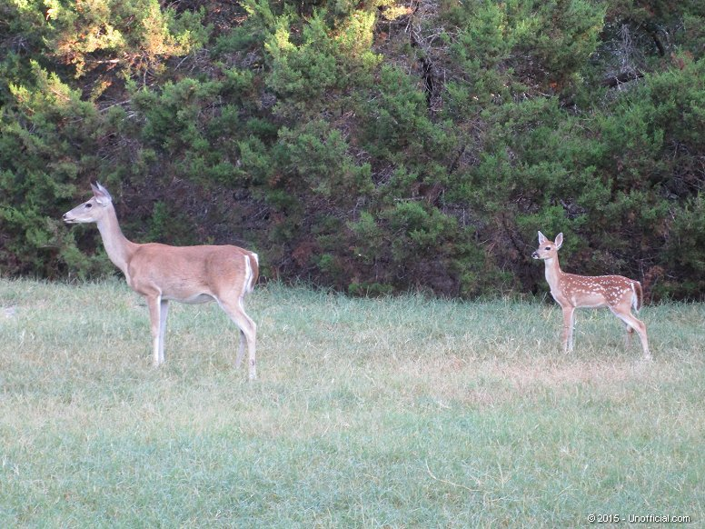 Front yard family in northwest Travis County, Texas