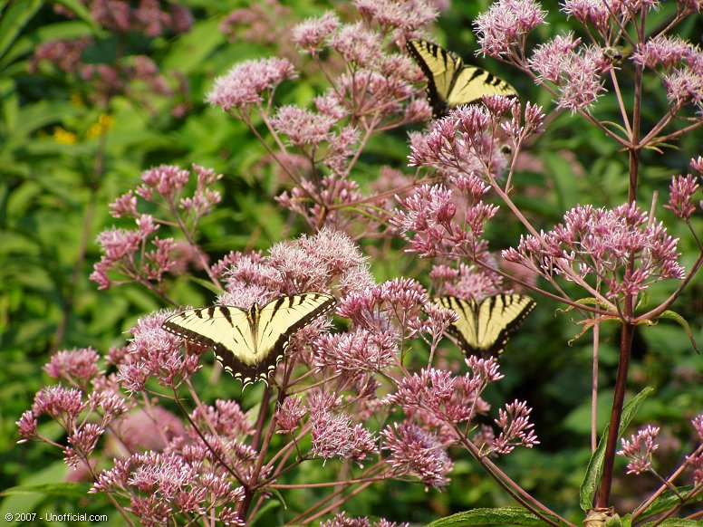 Butterflies in Kanawha County, West Virginia